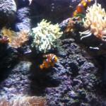 némo aquarium de paris