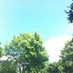 ciel bleu parc floral