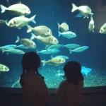 aquarium de paris avec les minis
