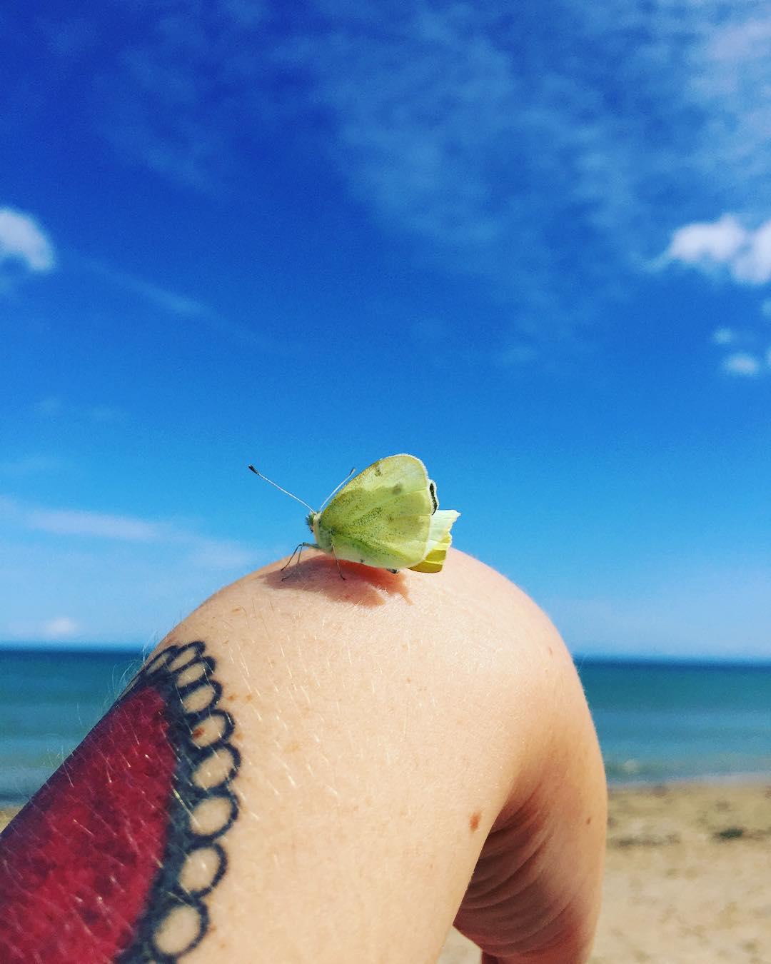 Jolie rencontre sur le sable papillon vacancesaufief vacancesdelareinedeliode