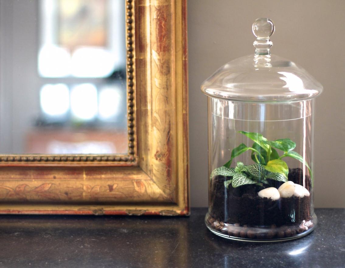 diy un jardin d 39 hiver sans la main verte la reine de l 39 iode. Black Bedroom Furniture Sets. Home Design Ideas