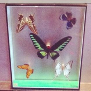 diy un cadre papillons la reine de l 39 iode. Black Bedroom Furniture Sets. Home Design Ideas